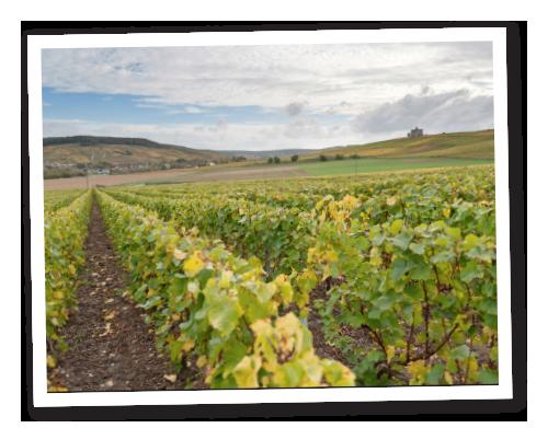 Champagne wijngaarden Oudart
